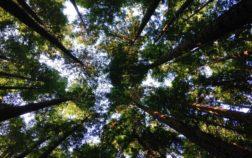 La aplicación de las energías renovables a la vida cotidiana